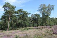 natuur bij bungalowpark vosseven belgisch limburg