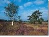 Mooie natuur in belgisch Limburg